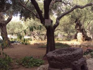 Gethsemane1
