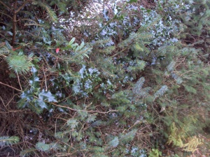 GardenatChristmas1